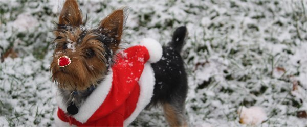 Dog dressed up to demonstrate stand out christmas brand